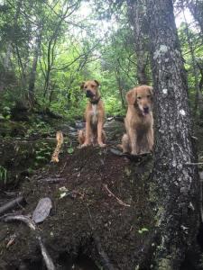 Mansfield Puppies